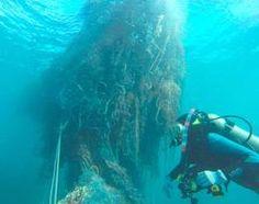 Ocean debris found to have impacted a staggering 700 marine species