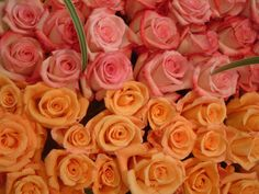Which color of roses is your favorite for October?