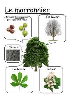 fiche marronnier - Science and Nature Science For Kids, Science And Nature, French Classroom, Fall Preschool, Montessori Activities, Spring Activities, Nature Study, Home Schooling, Learn French