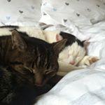 Baby-Hausschuhe | Ines strickt Portfolio, Cats, Animals, Baby Knitting, Gatos, Animales, Kitty Cats, Animaux, Animal Memes