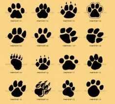 cat paw prints - Yahoo Image Search Results