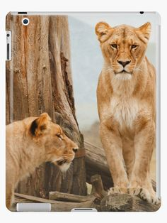 Big Cats, Cats And Kittens, Game Reserve South Africa, Lion Africa, Afrique Art, Kenya Travel, Lion Pictures, Cat Care Tips, Cat Behavior