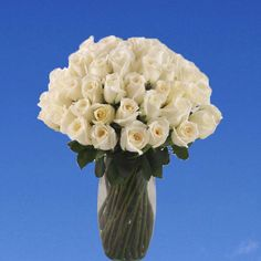 Gracious 36 White Roses with Vase