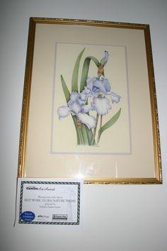 Iris - Coloured Pencil - Winner Gawler Art Prize