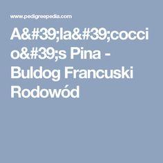 A'la'coccio's Pina - Buldog Francuski Rodowód