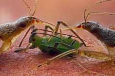 Olympus BioScapes Imaging Competition - In Focus - The Atlantic