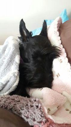 Rainy weather nap ♡