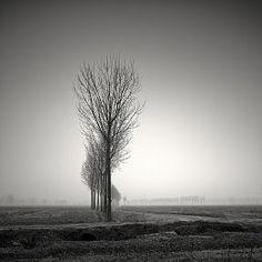 Sinuosity par Pierre Pellegrini