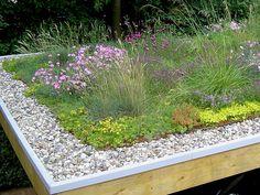 extensive Dachberünung von outdoor-design