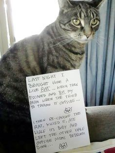 Cats can be assholes, but they're just too loveable for us to do anything about it. Cat shaming is the perfect win-win way to get back at them – we can feel like we've punished our cats while… Cat Shaming, Funny Animal Pictures, Funny Animals, Cute Animals, Wild Animals, Dog Pictures, Baby Animals, Silly Cats, Cute Cats