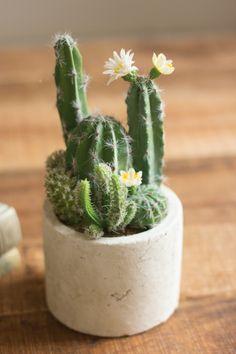 Kalalou Artificial Cactus Garden With Round Paper Pot