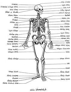 Medicine and Human Anatomy, my grandpa, Gabriel Kenoun