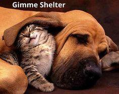 #dog Cat #adopt