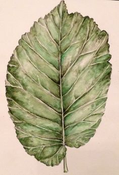Observational drawing of a leaf using pencil and watercolour paint, Julia Wright