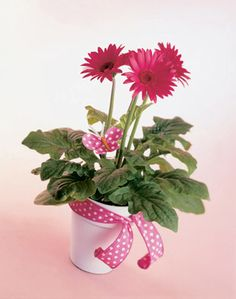 gerber daisy centerpieces - Bing Images - polka dot ribbon and butterfly