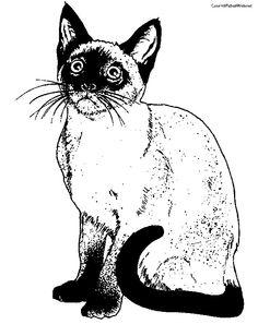 cat152.jpg (612×772)