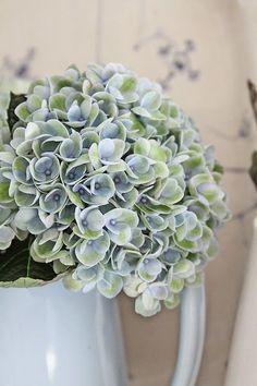 Love this colour for a hydrangea Hortensia Hydrangea, Blue Hydrangea, Hydrangeas, Love Flowers, Beautiful Flowers, Bouquet Champetre, House Color Palettes, Swedish Cottage, Vibeke Design