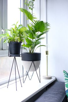 New plants indoor stand living rooms 47 Ideas Planting For Kids, Rustic Lamps, Office Plants, Apartment Interior Design, Trendy Home, At Home Gym, Cool Plants, Bars For Home, Home Living Room
