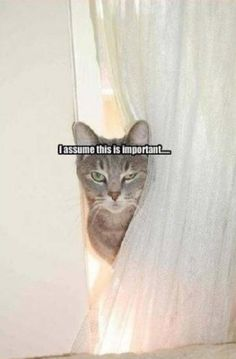 funny animals quotes and 34 pictures | Funny Pictures