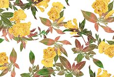 Explore and buy thousands of royalty-free stock seamless repeat print, pattern and textile designs from the world's largest online collection of textile Online Collections, Repeating Patterns, Textile Design, Print Patterns, Floral, Stuff To Buy, Winter Time, Flowers, Flower