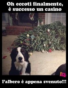 A time for family, love, gifts and Memes. Here's our 13 favorite Xmas memes. Cute Funny Animals, Funny Animal Pictures, Funny Cute, Funny Photos, Hilarious, Super Funny, Dog Quotes, Animal Quotes, Animal Memes