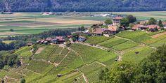 Vergessene Reben und andere Kuriositäten im Wallis