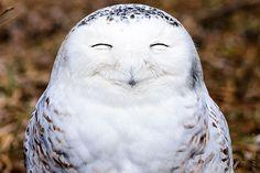 fotos de animales muy divertidas mis gafas de pasta señor feliz