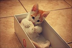 """Cats are cute.  Cats in boxes are even cuter.  They know this and make this most of it."" --Anonymous"