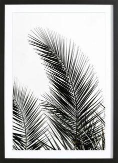 Palm Leaves 1 als Gerahmtes Poster von Mareike Böhmer | JUNIQE