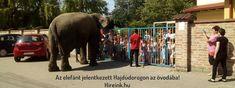 Az elefánt jelentkezett Hajdúdorogon az óvodába Örömujjongást és óriási meglepetést okozott az elefánt, amikor megjelent a Hajdúdorogi Sarokúti óvodában! Nem várt meglepetésben volt részük a mai napon az ovodásoknak, mert meglátogatta őket a városba látogat... Animals, Animales, Animaux, Animal, Animais, Dieren