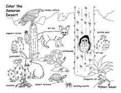 61 meilleures images du tableau Sciences: Animal, habitat