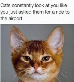 Don't inconvenience your friends (or cat). Park & Ride our shuttle to Hobby Airport!