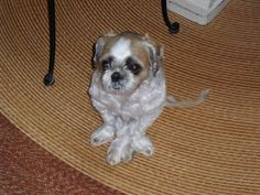 Vito....adorable