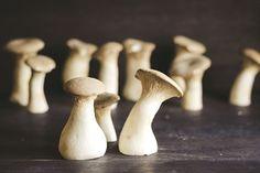 Mushroom Boletus