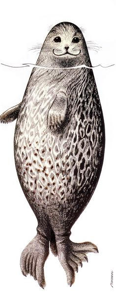 Saimaa Ringed Seal does not live anywhere else in the world than Finland Saimaa.The Saimaa ringed seal is critically endangered - it is facing an Seal Cartoon, Cartoon Art, Art And Illustration, Cute Paintings, Drawing Projects, Pet Rocks, Magical Creatures, Wire Art, Viborg