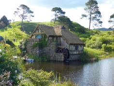 Hobbiton the real reason for coming to New Zealand – Viatori #travelpics #travel #newzealand #hobbiton