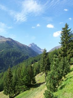 alps forest slopes