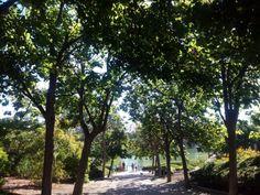 Parque de la Paloma Benalmadena, Beautiful Scenery, Days Out, Playground, Costa, Flowers, Plants, Sun, Parks