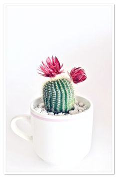 Did you know that a coffee mug makes a great vessel for a succulent or a small cactus? We like to se. Did you know that a coffee mug makes a great vessel for a succulent or a small cactus? We like to see that sometimes super easy = super cute