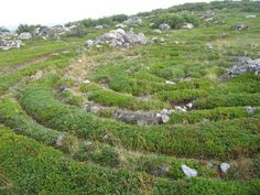 """Neolithic stone labyrinths on Bolshoi Zayatsky Island, one of the Solovetsky Islands in Arkhangelsk Oblast, Russia. There are 35 labyrinths (known as vavilons – """"Babylons"""" – in the local dialect) in the Solovetsky Islands. All have been made of local boulders.  The rows are twisted in the form of a spiral; often there are two spirals set one into another, which has been likened to """"two serpents with their heads in the middle looking at each other."""""""