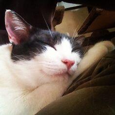 念入りにマッサージしたので、たいそう満足してご機嫌で眠りにつくみたお。やった自分も達成感あるw - @makoccchan- #webstagram