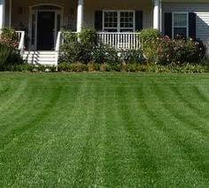 20/×300cm high Drought Resistance Grass Seed Mat Fertilizer Garden Picnic Gardening Lawn Planting Mat