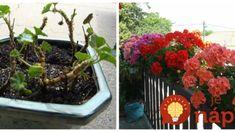 Tento rok si ho vyrobím ešte viac a nič iné už nepotrebujem. Flowers, Plants, Lawn And Garden, Plant, Royal Icing Flowers, Flower, Florals, Floral, Planets