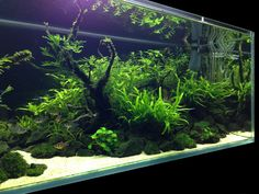 planted tank, nature aquarium, aquascape