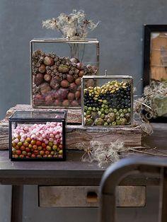 Herfstoogst display (in doosjes van Madam Stoltz) Fall Home Decor, Autumn Home, Autumn Inspiration, Garden Inspiration, Fall Fruits, Glass Boxes, Nature Decor, Fall Diy, Fall Flowers