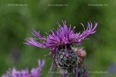 Plants, Lilac, Photos, Garden Plants, Botany, Flowers, Flora, Plant