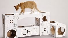 WHAT'S HOT: Build Your own Cool Cat Playhouse with Poopy Cat
