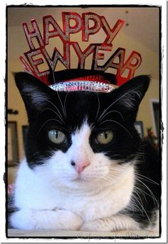 happy new year i love cats cute cats cat celebrating funny animals
