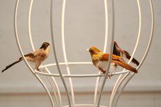 灯りに集う小鳥たち。  cesto