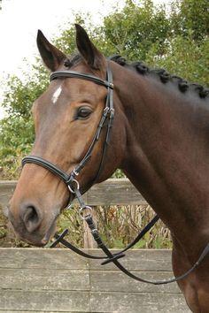 Harry's Horse Bitless Bridle – Tackshop